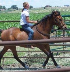 Arabian Dressage horse at demonstration in Scottsbluff, Nebraska