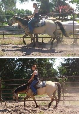 Biomechanics for horse and rider