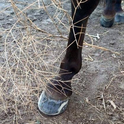 Easyshoes on an endurance horse