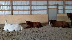 The Healing Herd